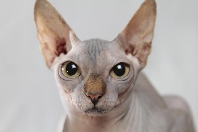 cat-629064
